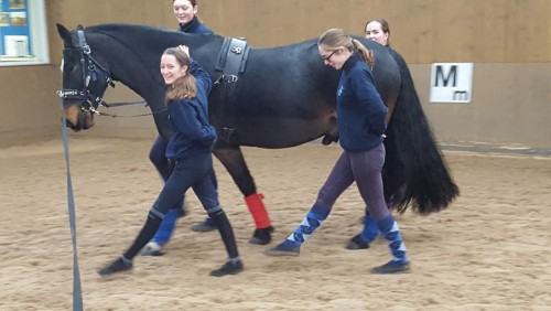 Students walking in rhythm with a horse