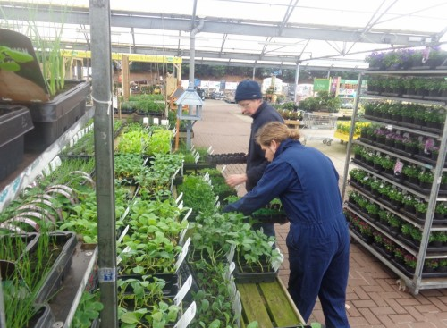 The learner is working in a garden centre as part of their supported internship placement.