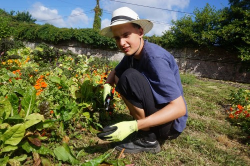 A student pruning plants in the garden